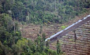 Le moratoire de deux ans des permis de défrichement, annoncé en fanfare en 2011 par l'Indonésie, n'est pas respecté et la destruction des vastes forêts équatoriales du pays se poursuit, a accusé jeudi une coalition d'ONG emmenée par Greenpeace.