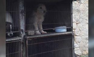21 chiens qui vivaient en cage ont été sauvé par la Fondation 30 millions d'amis.