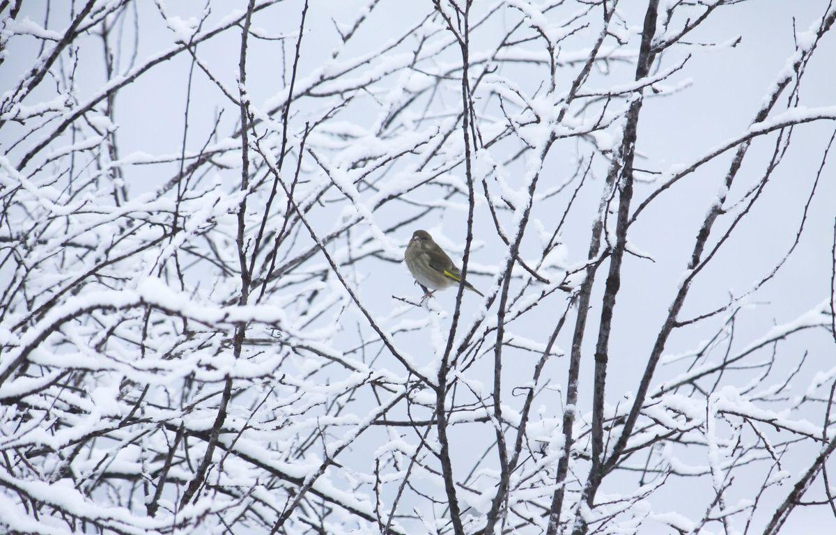 Un oiseau sous la neige. Illustration –  : XAVIER VILA/SIPA