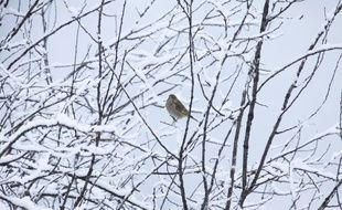 Un oiseau sous la neige. Illustration