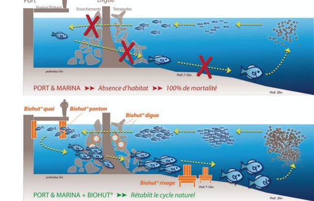 Les biohut visent à rétablir le cycle naturel de vie des poissons