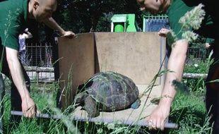 Capture d'écran de la sortie des tortues géantes dans leur pelouse d'été, le 25 mai 2012, à Paris.