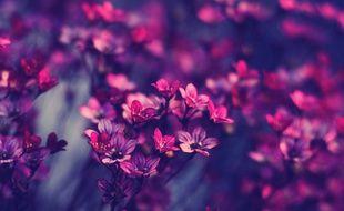 Elle est pas belle, la vie en rose ?