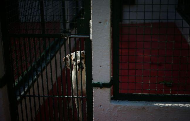 Rennes: Un homme poursuivi pour avoir tabassé son chien en pleine rue