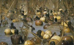 Au Nigéria, la pêche n'est pas industrielle. Ici, le climax du festival de pêche d'Argungu, quand des milliers de poissons sont attrapés.
