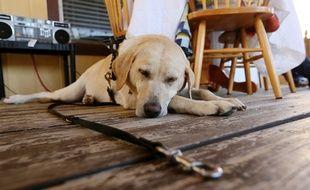 Mon hébergement animal est une plateforme qui regroupe toutes les solutions pour faire garder votre animal.