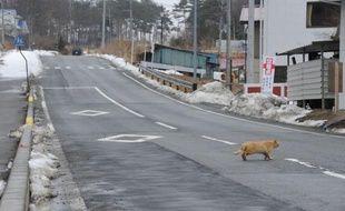 Près de deux ans après la catastrophe de Fukushima, il n'y a toujours pas d'habitants dans un rayon de plusieurs dizaines de kilomètres autour de la centrale maudite.