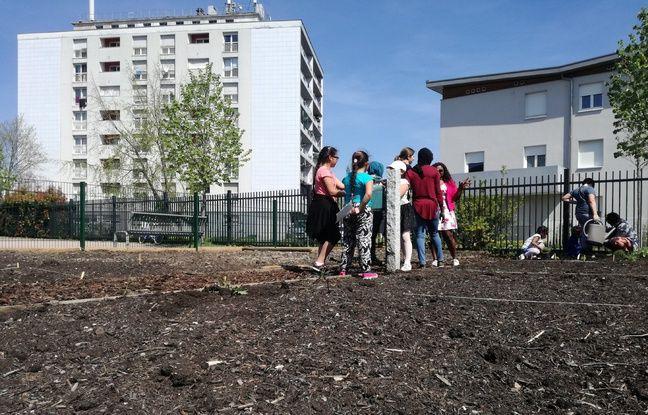Le jardin santé du Carré vert au Neuhof à Strasbourg est composé de quelques petites parcelles entre les bâtiments, où plusieurs associations se chargeront des cultures à Strasbourg.