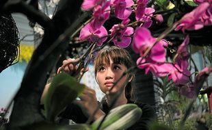 Plus de 800 orchidées sont arrivées en avion de Taïwan pour les Floralies