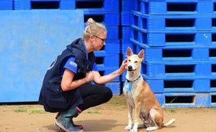 Foxtrot, le chien humanitaire qui essaie de maintenir l'attention du monde sur les Rohingya.