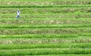 Ni OGM, ni processus classique de sélection par croisements successifs: des chercheurs ont dévoilé dimanche une technique révolutionnaire pour produire en un temps record des semences à fort rendement ou résistantes au changement climatique.