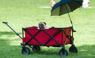 Un chien protégé du soleil par une ombrelle le 1er août 2017