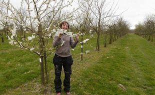 Des pruniers en fleurs dans un verger de Villeneuve d'Ascq.