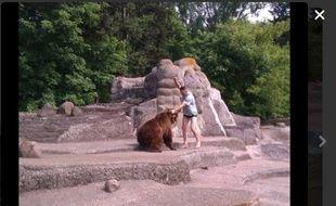 Un homme agresse un ours en Pologne