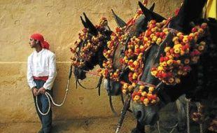 La ville de Jerez organise également des férias du cheval.