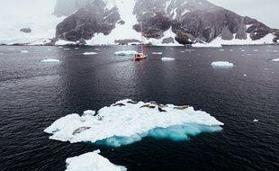 Des phoques sur un petit iceberg au large de la péninsule antarctique.