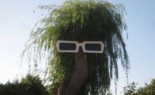 Les lunettes de Polnareff étaient installées depuis 2016 sur un arbre à Pont-l'Abbé dans le Finistère.