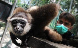 Chanee recueille les singes en Indonésie, en juin 2012.