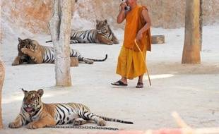"""Un projet de barrage qui inonderait un parc national de l'ouest de la Thaïlande représente une """"nouvelle menace significative"""" pour les derniers tigres sauvages du pays, a estimé mercredi le Fonds mondial pour la nature (WWF)."""