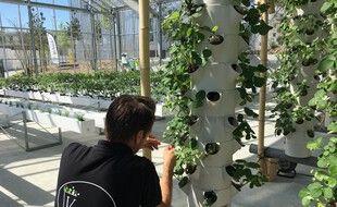 Les cultures à la verticale permettent de proposer des plantations en milieu urbain.