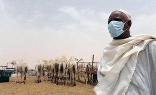 Un Saoudien porte un masque tandis qu'il travaille au contact de dromadaires, dans sa ferme près de Riyad, le 12 mai 2014