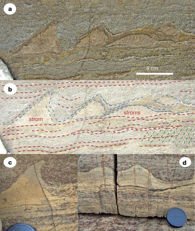 Les stromatolites découverts au Groenland (a et b) comparés à ceux découverts en Australie (c et d).