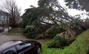 Illustration d'une chute d'arbre sur une route.