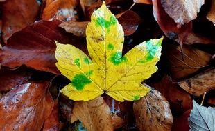 Des feuilles mortes. Illustration.