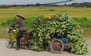 Ce sont 13,8% de la valeur ajoutée de la production alimentaire mondiale qui sont perdus entre la récolte et la vente au détail, selon les chiffres communiqués par la FAO.