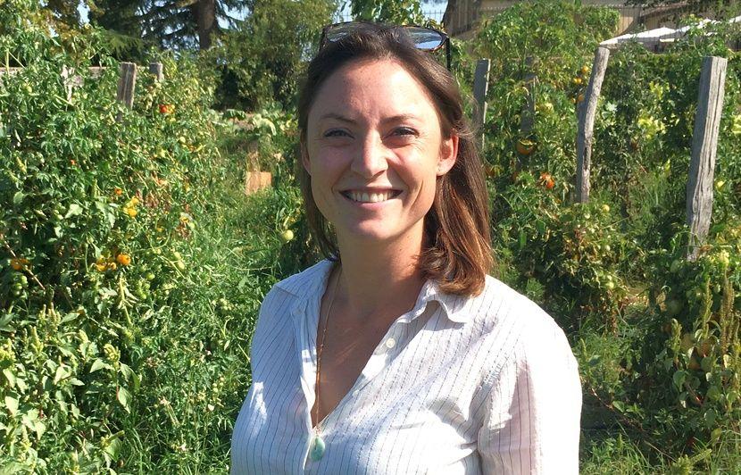 Vins de Bordeaux : Pourquoi château Guiraud a-t-il planté 482 espèces de tomates différentes ?