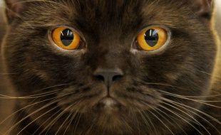 Le chat a été retrouvé à seulement 500 mètres de la maison de ses maîtres