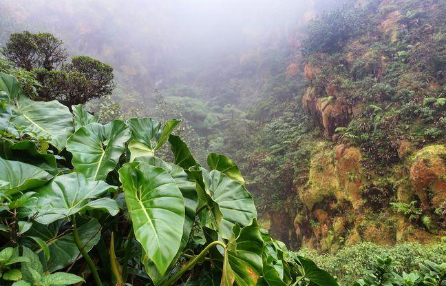 La Soufrière est une « Vieille Dame » au repos. Les randonneurs en profitent pour arpenter ses sentiers baignés de vapeurs sulfureuses.