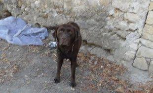 Eliot, le labrador toulousain, kidnappé le 30 décembre 2015 dans le gers, retrouvé huit mois plus tard dans le Lot-et-Garonne.