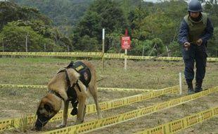 Un soldat et un chien renifleur à la recherche de mines dans le département colombien d'Antioquia, le 3 mars 2015