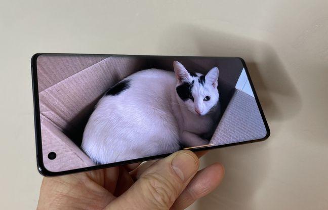 L'écran Full HD+ du Vivo X51 (et le chat du journaliste).