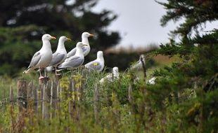 Le plan biodiversité, présenté ce mercredi, prévoit de relancer la création de zones protégées en France.