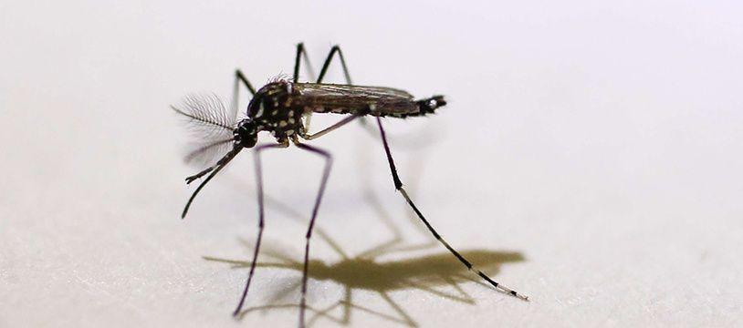 Le virus Zika est transmis par les moustiques.