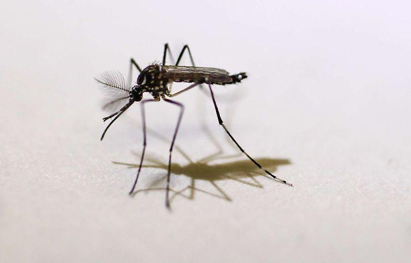 Var : Une deuxième personne infectée par le virus Zika diagnostiqué