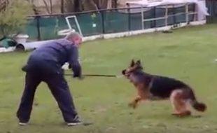 La vidéo du chien maltraité posté sur les réseaux sociaux.