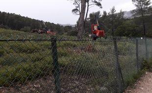 Les machines en train d'abattre les pins d'Alep sur le campus de Luminy.