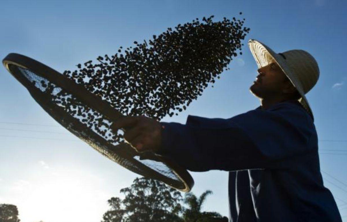 """Un agriculteur travaille son café bio, le 6 août 2015 à la """"Ferme Écologique Fortaleza"""", à 300 km au nord de Sao Paulo – NELSON ALMEIDA AFP"""