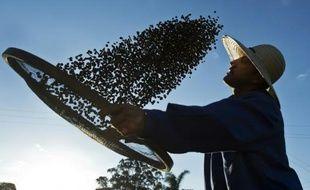"""Un agriculteur travaille son café bio, le 6 août 2015 à la """"Ferme Écologique Fortaleza"""", à 300 km au nord de Sao Paulo"""