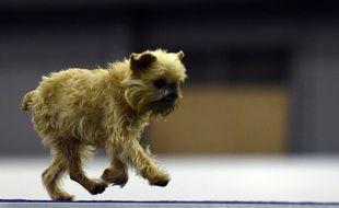 C'est un petit chien comme celui-ci qui a subi des sévices sexuels (illustration).