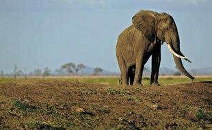 Un éléphant dans le parc national de Mikumi en Tanzanie, le 14 octobre 2013