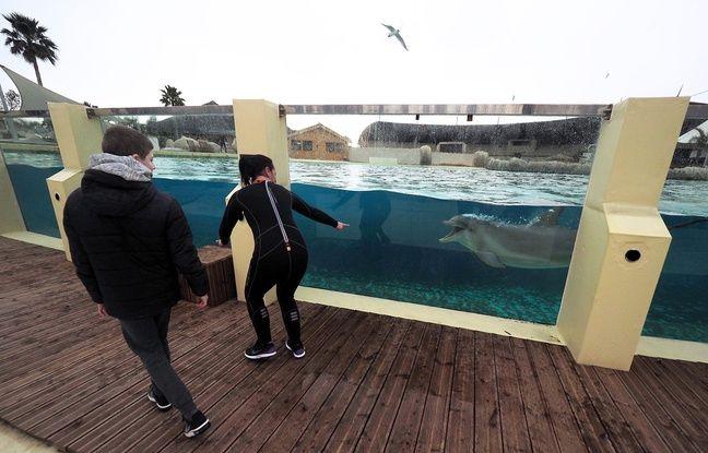 Une nouvelle animation au lagon des dauphins