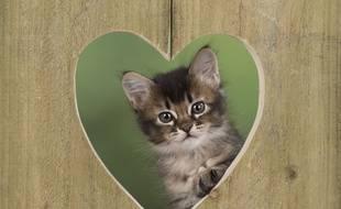 Chaton posant à travers un coeur. Une manière de célébrer la journée du chat