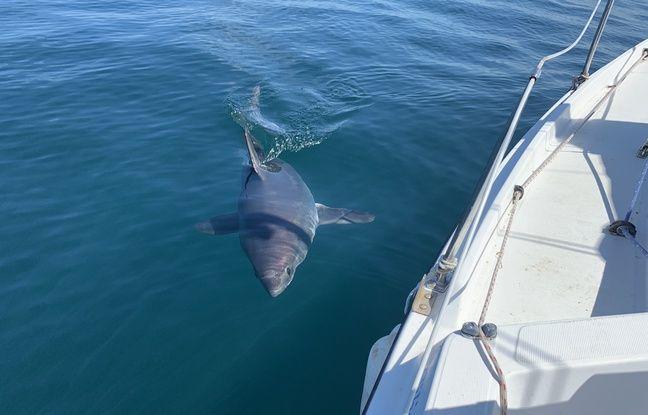 VIDEO. Bretagne: Un pêcheur croise la route d'un requin à la sortie du port de Trégastel