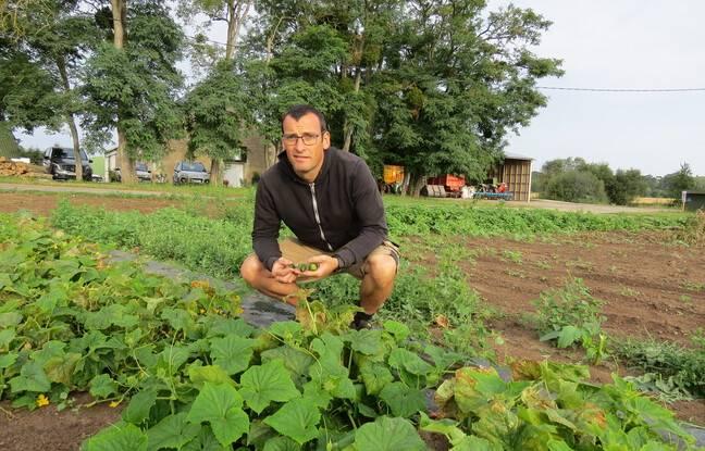 Depuis quelques années, en partenariat avec Reitzel, Sylvain Teissier, agriculteur dans le Loir-et-Cher, relance la culture du cornichons sur ses terres.