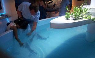 A l'aquarium Mare Nostrum, on peut toucher les poissons et pas seulement avec les yeux