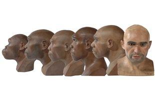 Evolution des hominidés.